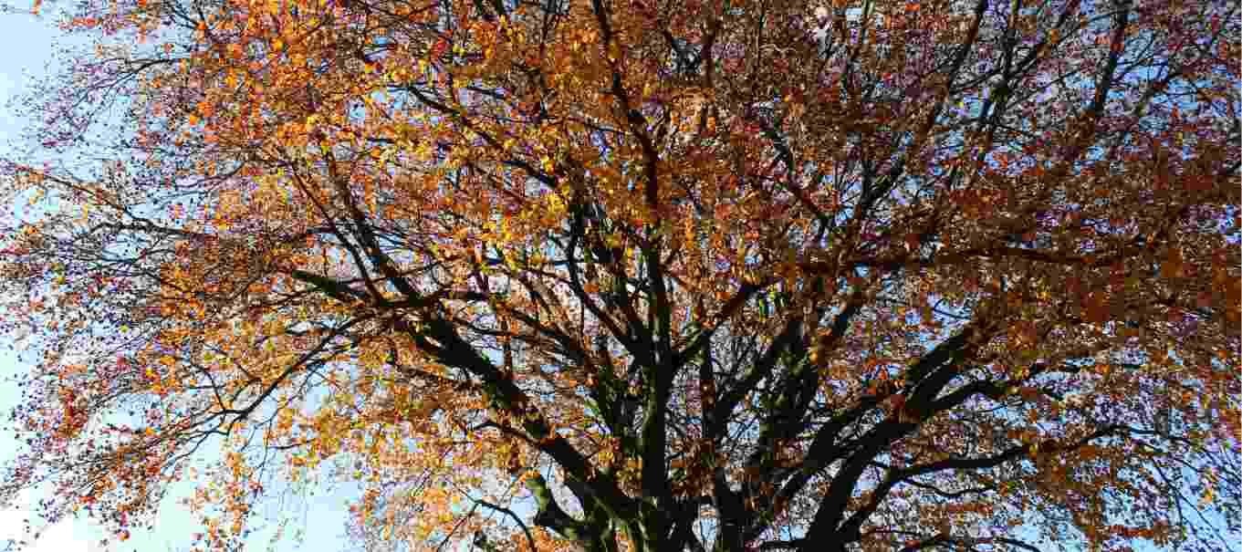 Impressie Herfst Beuk